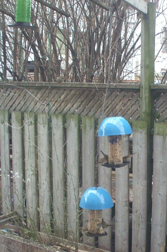 DIY Covered bird feeders