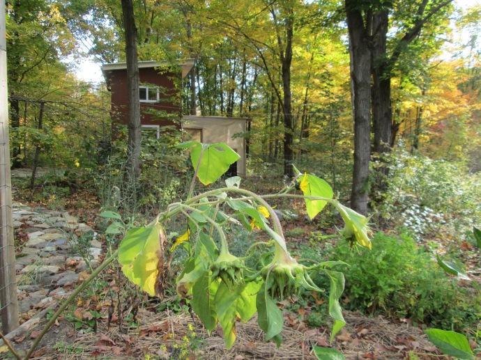 THO Tangled Garden