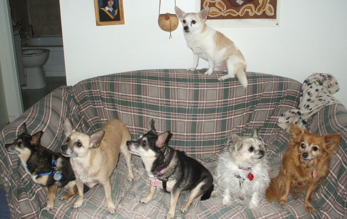 Josh, Tippy, Danny, Imp, Minnie and Honey enjoy some time together.