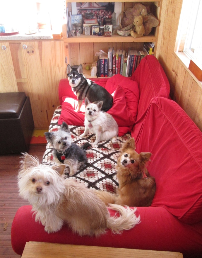 Come sit on the sofa with us… we will make space for you to cuddle with us!  From top to bottom, Imp, Minnie, Rudigrrr Wolf, Honey and Dieter.
